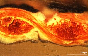 the cross section shows the fibre core and the paint layers©University of Glasgow